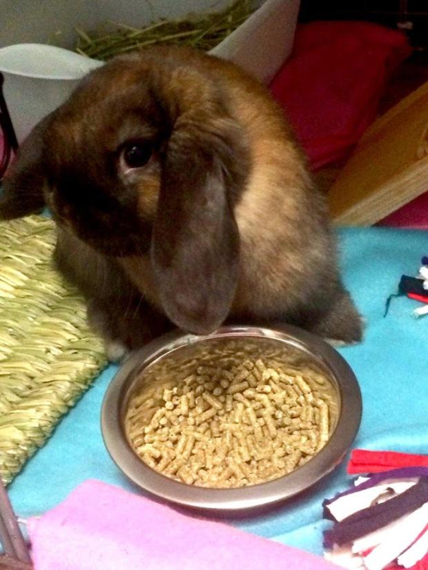 Pip the Rabbit